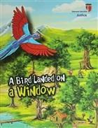 A Bird Landed On a Window