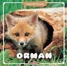 Orman - Hayvanlar Dünyası