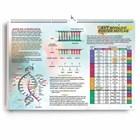 AYT Biyoloji Poster Notlar